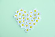 Heart-shape Framed Prints - Little Daisy Framed Print by Poppy Thomas-Hill