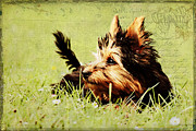 Puppies Mixed Media - Little dog by Angela Doelling AD DESIGN Photo and PhotoArt