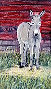 Grey Pastels Framed Prints - Little Donkey Framed Print by Jan Amiss