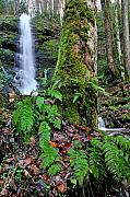 Fern Originals - Little Fall Branch Falls by Alan Lenk