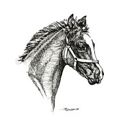 Mare Drawings - Little Filly by Richard De Wolfe