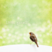 Bird; Meadow Acrylic Prints - Little friends Acrylic Print by Angela Doelling AD DESIGN Photo and PhotoArt