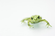 Green Frog Prints - Little Frog Print by Erik van Hannen