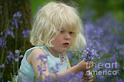 Hyacinthoides Non-scripta Posters - Little Girl With Bluebells Poster by Mark Taylor