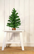 Bright Posters - Little green fir tree Poster by Sandra Cunningham