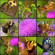 Honey Bee Posters - Little Guys  Poster by East Coast Barrier Islands Betsy A Cutler