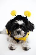 Small Dog Prints - Little Honey Bee Print by Kim Fearheiley