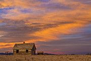 Striking Images Framed Prints - Little House On The Colorado Prairie 2 Framed Print by James Bo Insogna