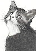 Cute Kitten Drawings Prints - Little Kitten in Pencil Print by Joyce Geleynse