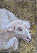 Sheep Pastels Framed Prints - Little Lamb Framed Print by Wendie Thompson