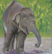 Calf Pastels - Little Luk Chai by Louise Green