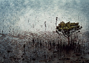Margaret Hormann Bfa - Little Mangrove