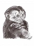 Monkeys Drawings - Little Monkey by John Keaton