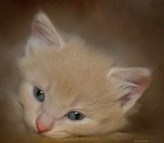 Cat Artwork Framed Prints - Little One Framed Print by Steven Richardson