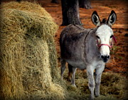 Baby Donkey Posters - Little Pedro Poster by Karen Wiles