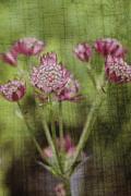 Deborah Benoit - Little Pink Jewels
