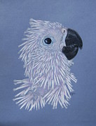 Umbrella Cockatoo Framed Prints - Little PJ Framed Print by Laurilee Taylor