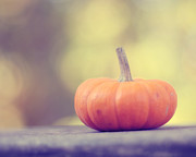 Fall Photographs Posters - Little Pumpkin Poster by Amy Tyler