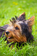 Cute Puppy Pictures Photos - Little Puppy by Angela Doelling AD DESIGN Photo and PhotoArt