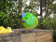 Cute Bird Photos - Little Rascal by Dolly Sanchez