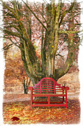 Park Benches Posters - Little Red Bench Poster by Debra and Dave Vanderlaan