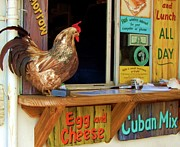 Cuban Photos - Little Red Rooster by Debbi Granruth