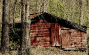 Little Red Shed Print by Ginger Barritt