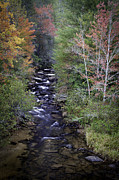 Little River Posters - Little River - North Carolina Autumn Scene Poster by Rob Travis