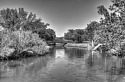 Miami River Photos - Little river by Armando Perez
