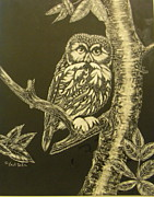 Scratchboard Paintings - Little Saw-whet by Jack Bolin