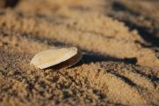 Bay Head Beach - New Jersey - Little Seashell 2 - Jersey Shore by Angie McKenzie