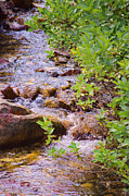 Little Stream - Utah Print by Donna Van Vlack