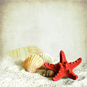 Variation Art - Little Treasures From Sea by ©jesuscm