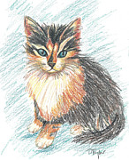 Cats Drawings Originals - Little Vixen by Terry Taylor