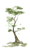 Bonsai Framed Prints - Little Zen Tree 204 Framed Print by Sean Seal