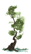 Bonsai Tree Framed Prints - Little Zen Tree 207 Framed Print by Sean Seal