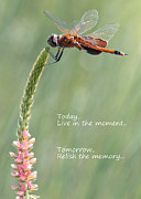 Life Greeting Cards Prints - Live in the Moment  Print by Carol Groenen