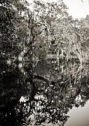 Live Oak Tree Prints - Live Oak Reflections Print by Dustin K Ryan