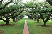 Large Trees Framed Prints - Live Oaks Framed Print by Francine Gourguechon