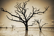 Live Oaks Of Botany Bay Beach Sc Sepia Print by Dustin K Ryan