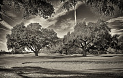 Golf Holes Framed Prints - Live Oaks Framed Print by Phill  Doherty