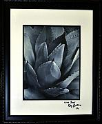 Framed Matted Photos - Live Sucs by Clayton Bruster