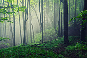 Mist Metal Prints - Living Forest Metal Print by Evgeni Dinev