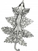 Pen  Drawings - Lizard and leaf by Nick Gustafson