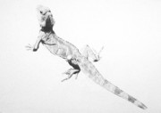 Reptiles Drawings - Lizard by Angela Qian