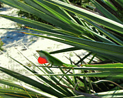 Saw Palmetto Photos - Lizard in Love by Peg Urban