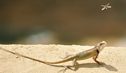 Pakistan Art - Lizards by Shahzeb Nasir