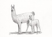Pack Animal Drawings Posters - Llama and Cria Poster by Sherri Strikwerda
