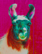 Llama Digital Art Metal Prints - Llama Of A Different Color Metal Print by Smilin Eyes  Treasures