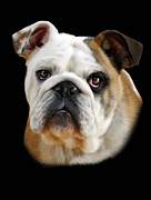 Bulldog Digital Art Posters - Llewellyn Poster by Julie L Hoddinott